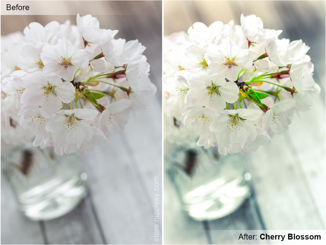 cherry-blossom-lightroom-preses
